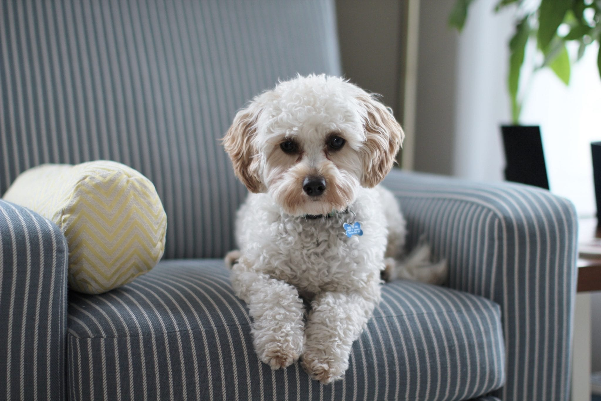 4 Tips For Cleaning Up Pet Messes Between Professional Cleanings